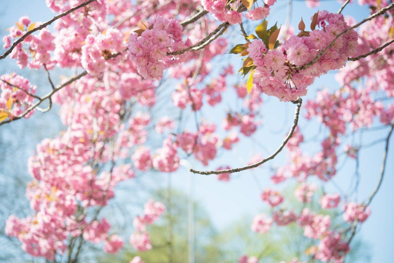 Tavaszi kertrendezés
