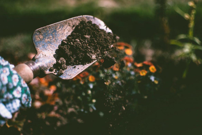 Nyári ültetés a kertben