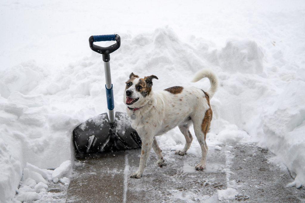 A hólapát hű társunk lesz, ha megjön a havazás.