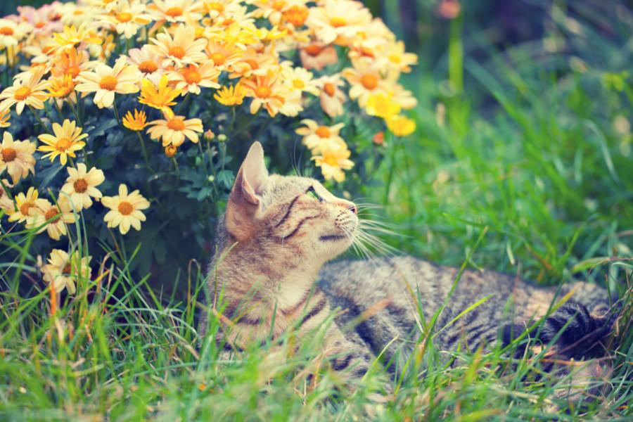 Virág és cica